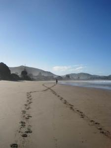 Wainui-Beach-photo-by-Dave-Beard
