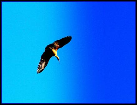 eagle21