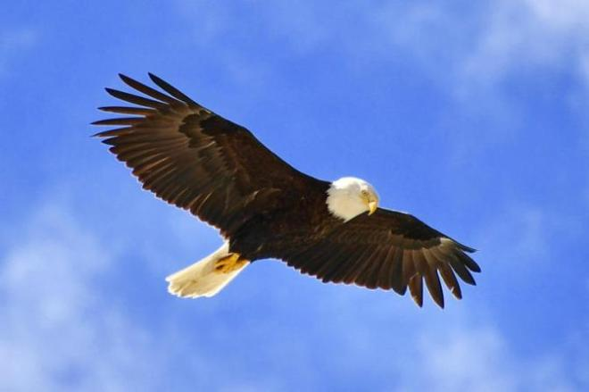 eagle-soar