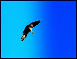 Eagle john