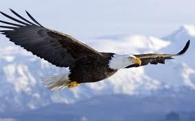 eagle nu