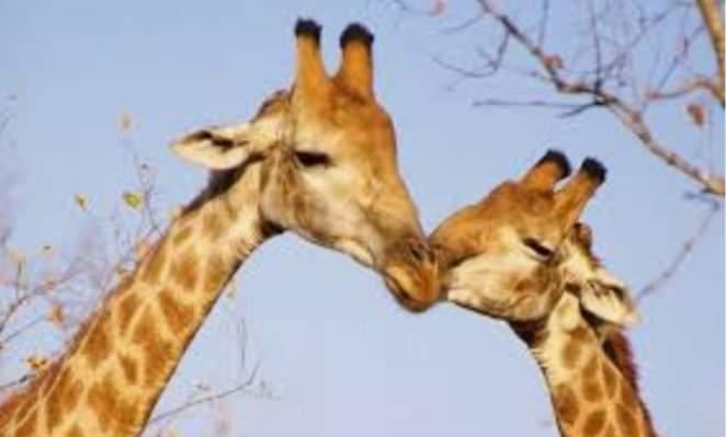 Valentine's Day inAfrica